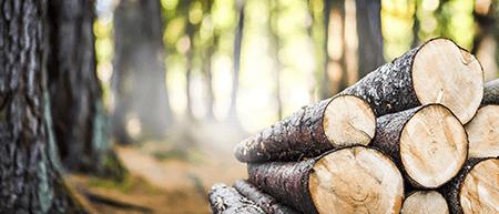 Holz wird beim sanieren von altbauten oft benötigt